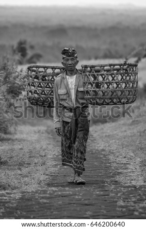 Jatiluwih, Tabanan, Bali, Indonesia - May 14, 2017 : Older balinese man carrying grass for his cattle