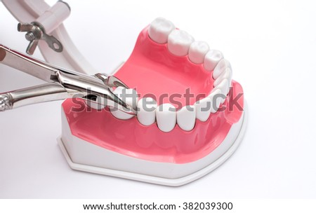 jaw model and set dental on white background