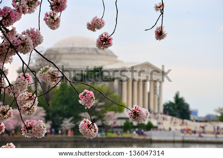 Jefferson memorial in cherry bloom - stock photo