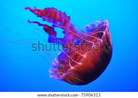 Jelly fish - stock photo