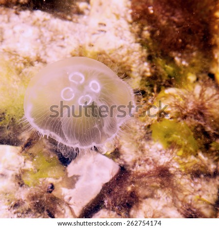 Jellyfish in the water.Special toned photo in vintage style - stock photo