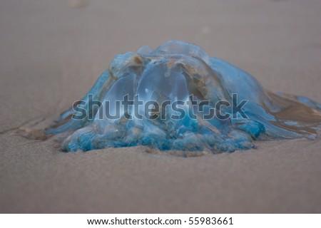 Jellyfish on sand - stock photo