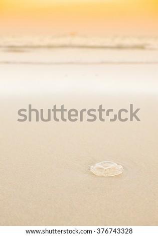 Jellyfish on sand beach in sunrise time. - stock photo