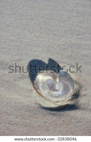 Jellyfish on the beach - stock photo