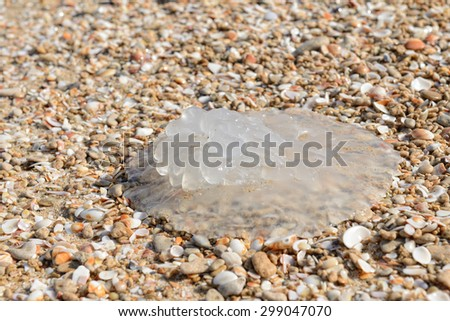 Jellyfish on the sea sand - stock photo