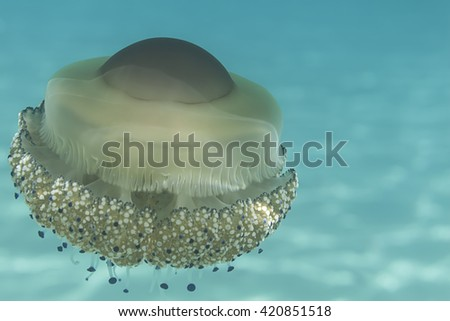 jellyfishes with blue light  jellyfishes jellyfishes jellyfishes jellyfishes jellyfishes jellyfishes jellyfishes jellyfishes jellyfishes jellyfishes jellyfishes jellyfishes jellyfishes jellyfishes  - stock photo