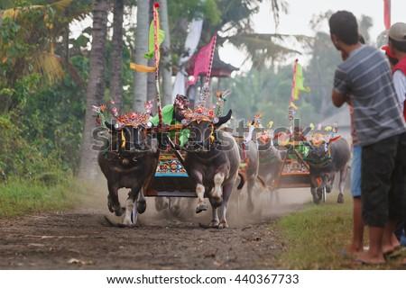 Kerbau Stock Images, RoyaltyFree Images  Vectors  Shutterstock