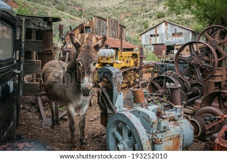 Jerome Arizona Ghost Town donkey and a lot of garbage - stock photo