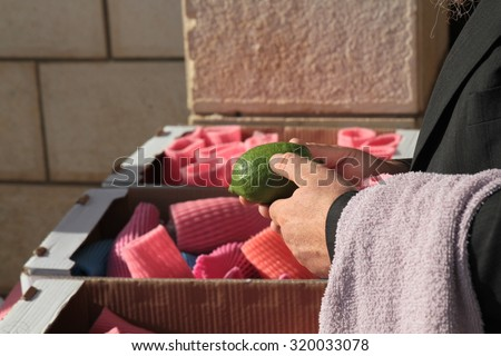 Jewish ultra-orthodox man inspect Etrogs at a four species market for the Jewish holiday of Sukkot on October  - stock photo