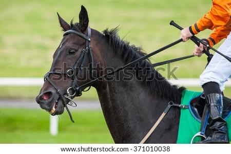 jockey holding on reins on a race horse - stock photo