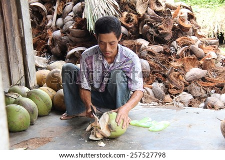 JOGJAKARTA, INDONESIA-APRIL.12, 2014:A farmer demonstrates the hulling of a coconut. Indonesia is the leading producer of coconuts in the world and it plays an important role of the country's economy. - stock photo