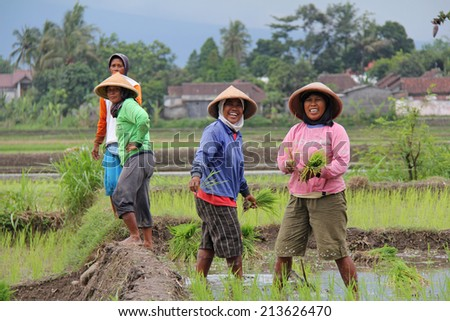 JOGJAKARTA, INDONESIA-APRIL10, 2014: In a field just outside of Yogyakarta, women take a break from planting rice to wave at passing tourists. - stock photo
