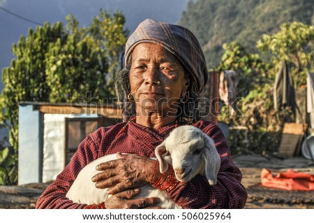 JOMSON, NEPAL - DEC 2, 2013: portrait of old nepalese woman. She wears the  young lamb in her hands.