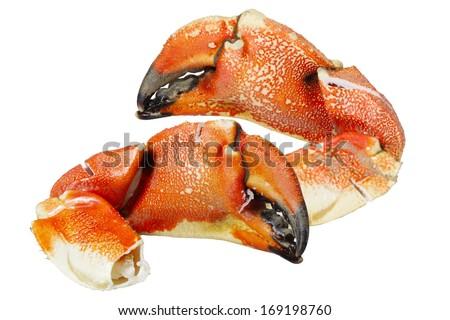 Jonah Atlantic Coast Rock Crab Claws isolated on white background - stock photo