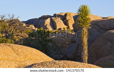 Joshua Tree and Giant Rocks in National Park