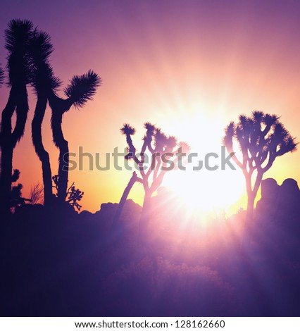 Joshua tree in  desert - stock photo