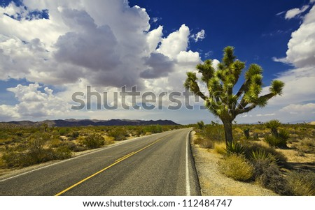 joshua tree in joshua tree national park in the USA