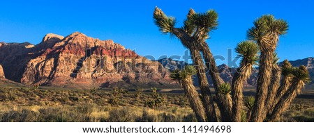 Joshua tree in Red Rock Canyon park, Nevada. - stock photo