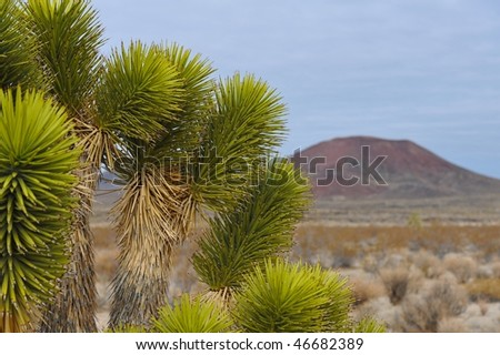 Joshua tree in the Nevada Desert - stock photo