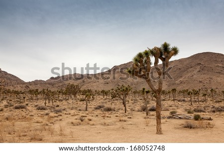 Joshua Tree National Park, California - stock photo