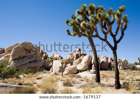 joshua tree national park - two trees by rock formation, blue sky with copyspace