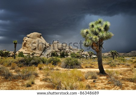 Joshua Tree National Park, USA - stock photo