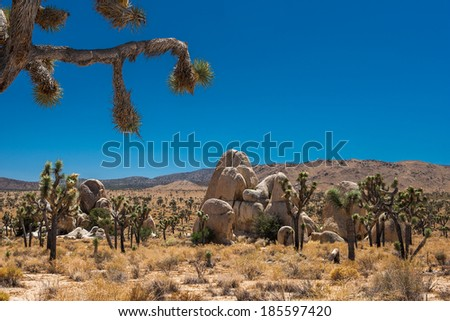 joshua tree scenary