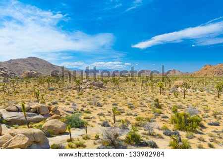 Joshua Tree With Mountains In The Background - stock photo