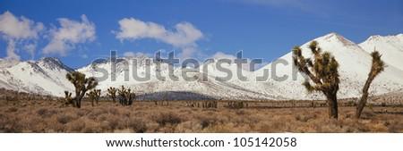 Joshua Trees In The Sierra Nevada Mountains, California - stock photo