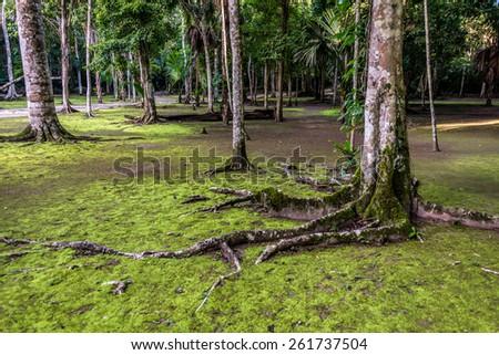 Journey through Guatemala, path in the Park Tikal, Jungle envoirment. - stock photo