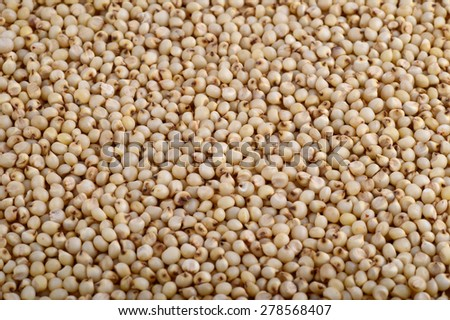 Jowar (Sorghum) arrange as background, Close up.