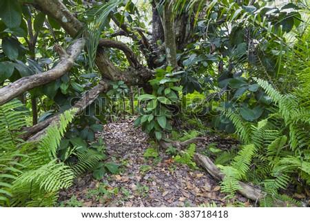 Jozani Forest, Zanzibar, Tanzania  - stock photo