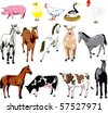 JPG Raster Illustration of 14 Farm Animals birds, and mammals. Also available as a vector. - stock photo