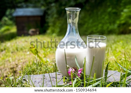 jug and glass of fresh milk in a green bacground - stock photo