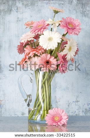 jug of pink gerber daisies on grunge blue background - stock photo
