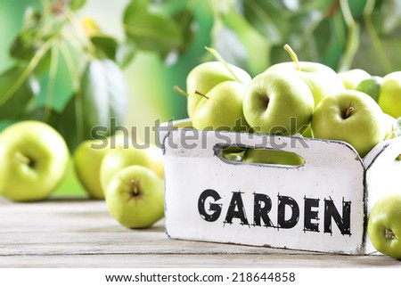 Juicy apples in garden box, close-up - stock photo