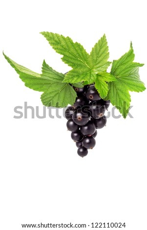 Juicy black currant on a white background - stock photo