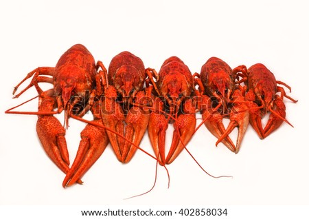 juicy boiled crayfish isolated, lined up in size. unusual view. - stock photo