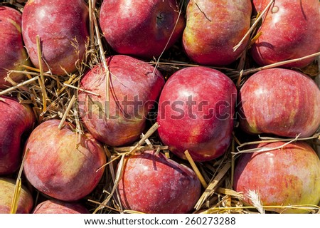 Juicy fruit in a box, ripe apples. - stock photo