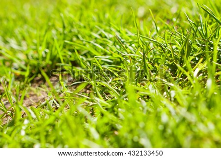 juicy grass on the lawn, natural background - stock photo