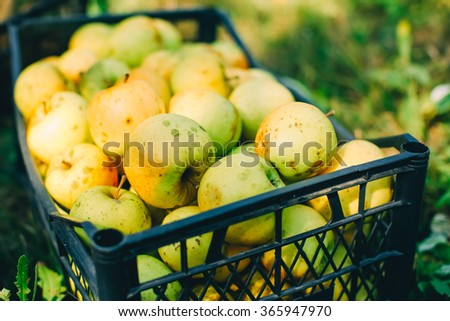 Juicy green apples in box on the grass - stock photo