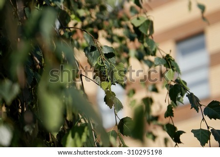 Juicy green foliage. Spring herb. Sunlight on green leaves. - stock photo