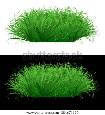 Juicy green grass on isolated background - stock photo