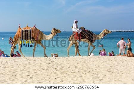 JUMEIRAH BEACH,UNITED ARAB EMIRATES-DECEMBER 6, 2013: Camels and tourists on Jumeirah beach in Dubai