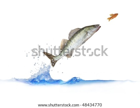 jump for fish - stock photo