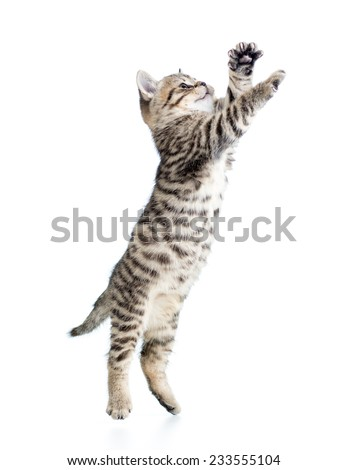 jumping cat kitten isolated on white background - stock photo