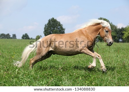 Jumping chestnut horse with blond mane in nature in front of some trees on the background