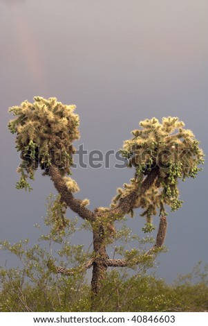 Jumping Cholla Cactus with ominous looking clouds behind it, seen in a vertical orientation - stock photo