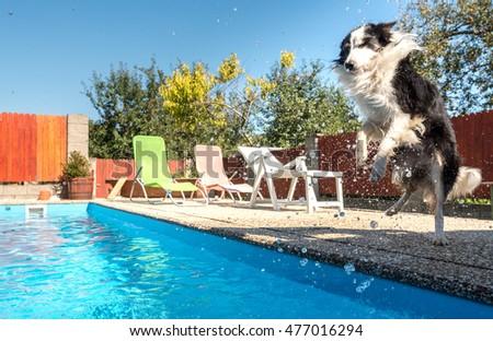 Kojin 39 S Portfolio On Shutterstock