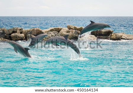 Jumping dolphins in the sea in Curacao - stock photo